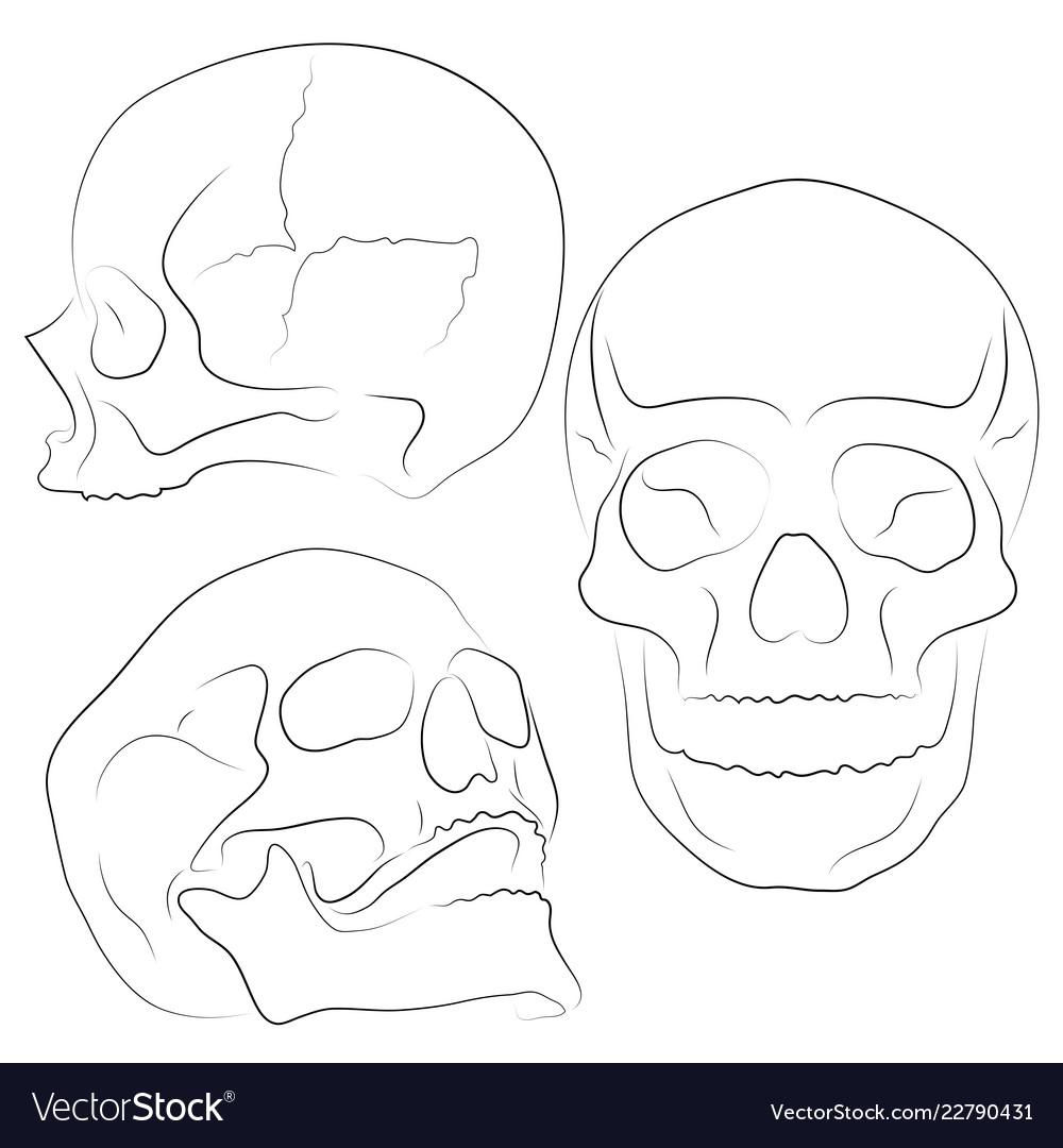 Skull collection of hand drawn skulls hard core