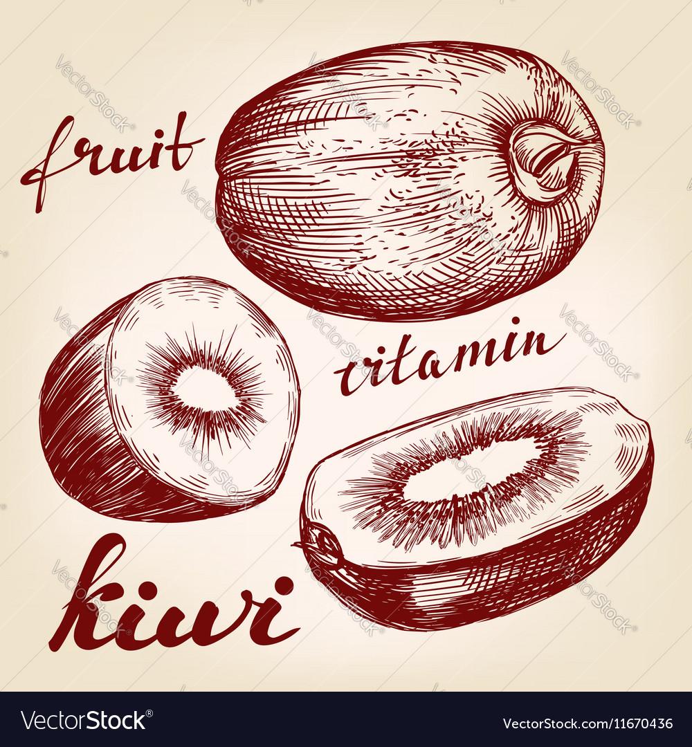 Fruit kiwi set hand drawn llustration