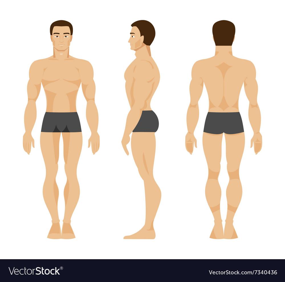 Male Anatomy Royalty Free Vector Image Vectorstock