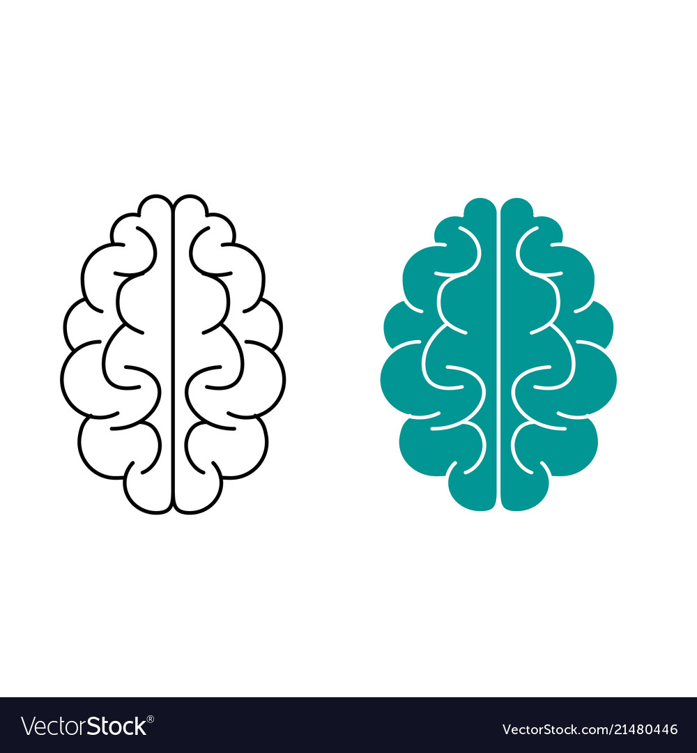 Schematic representation of the brain in two Vector Image
