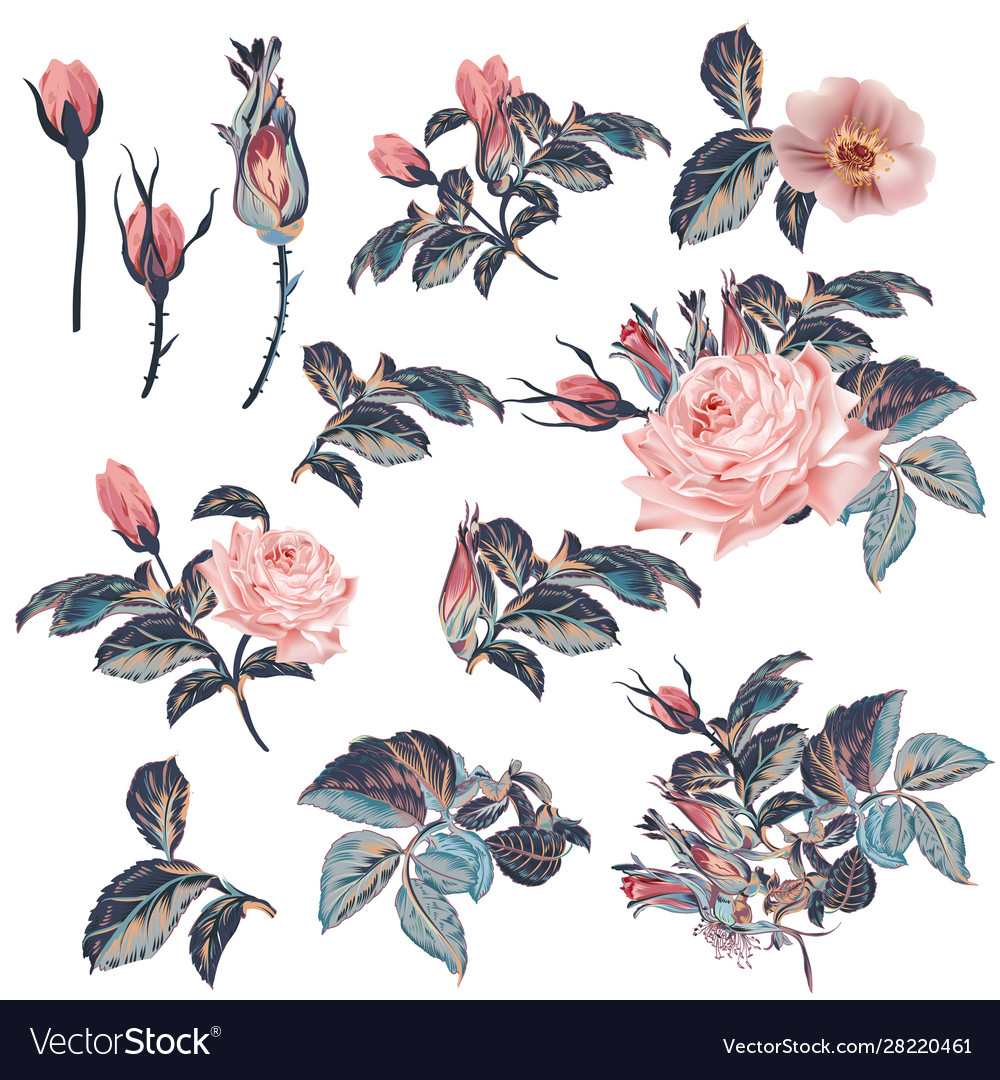Collection vintage roses in watercolor style