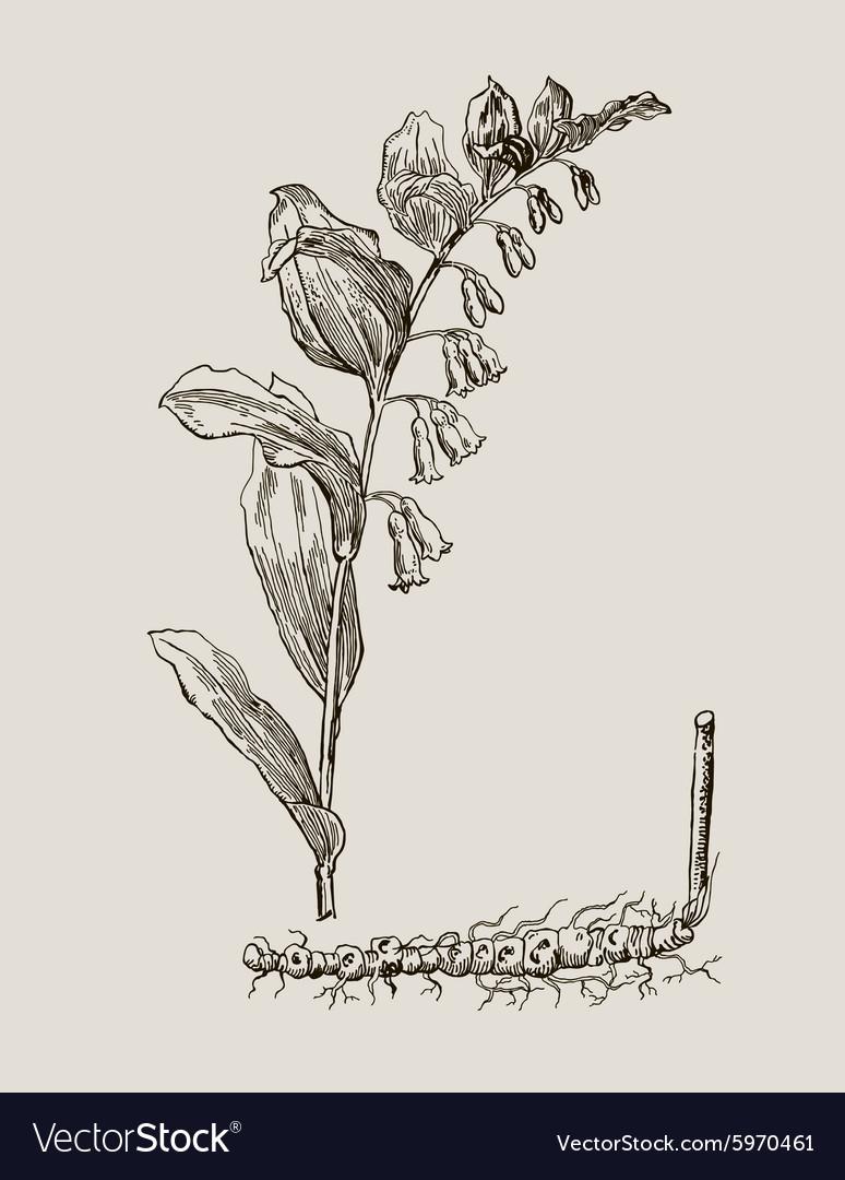 Images of medicinal plants Detailed