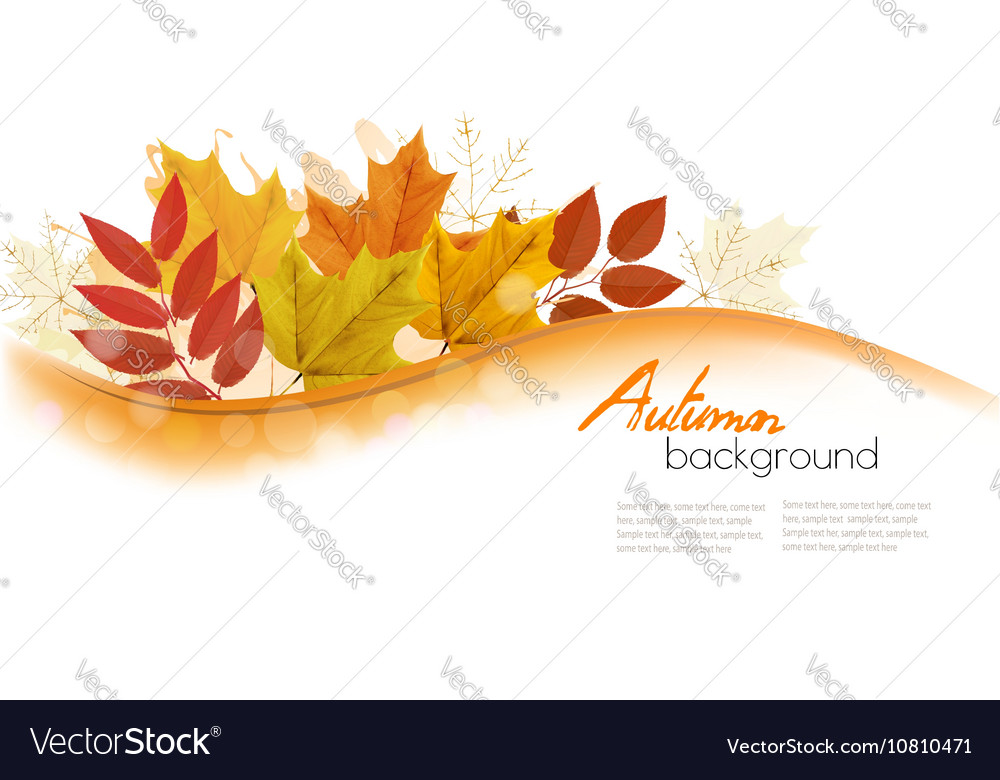 Autumn Nature Background With Colorful Leaves vector image