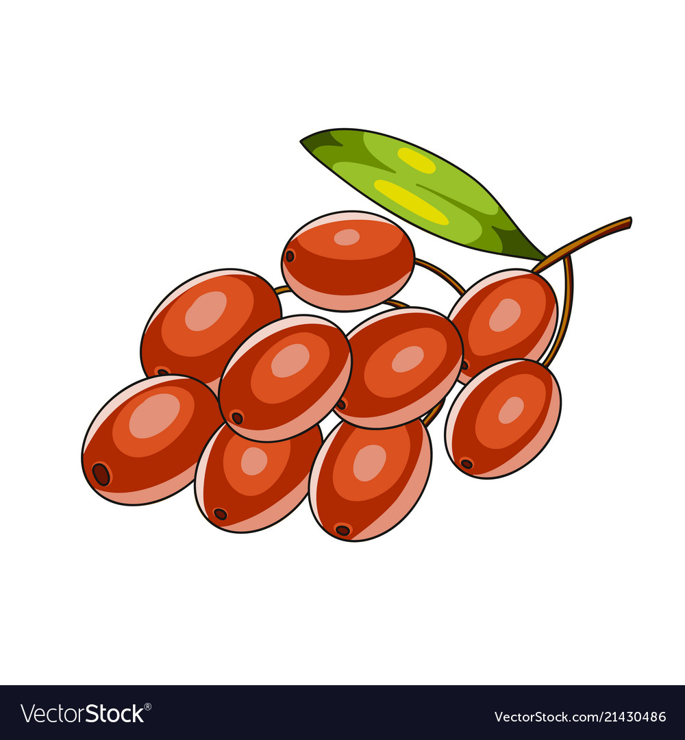 Barberry berries icon