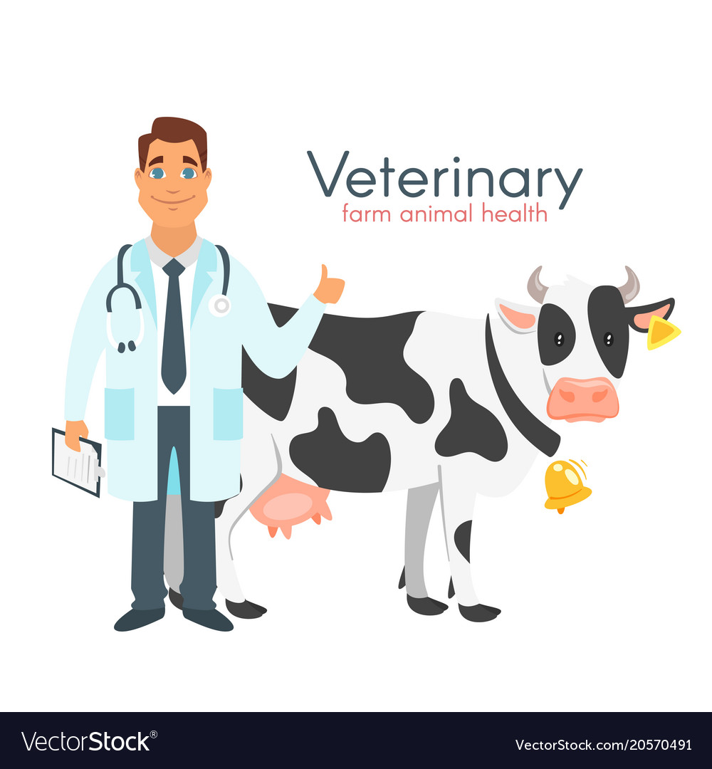 Veterinarian doctor with cow