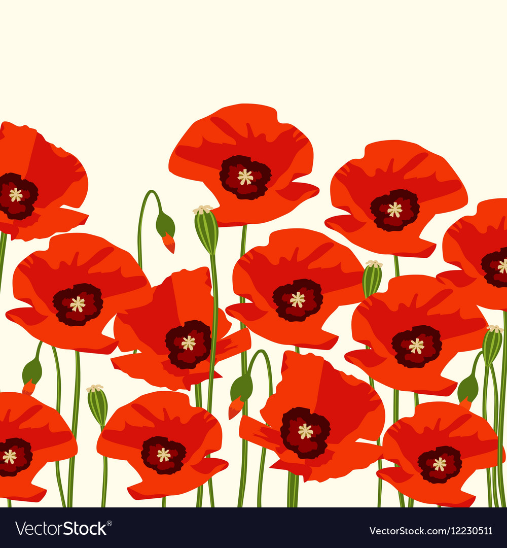 The poppy flowers royalty free vector image vectorstock the poppy flowers vector image mightylinksfo