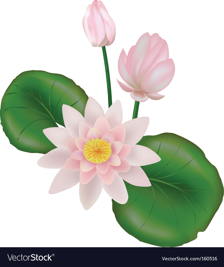 Lotus with leaves vector image