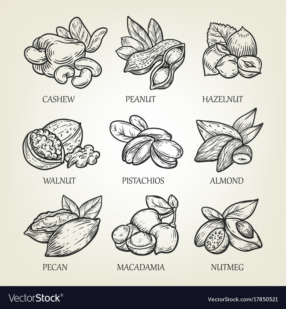 Sketch of different kinds of nuts
