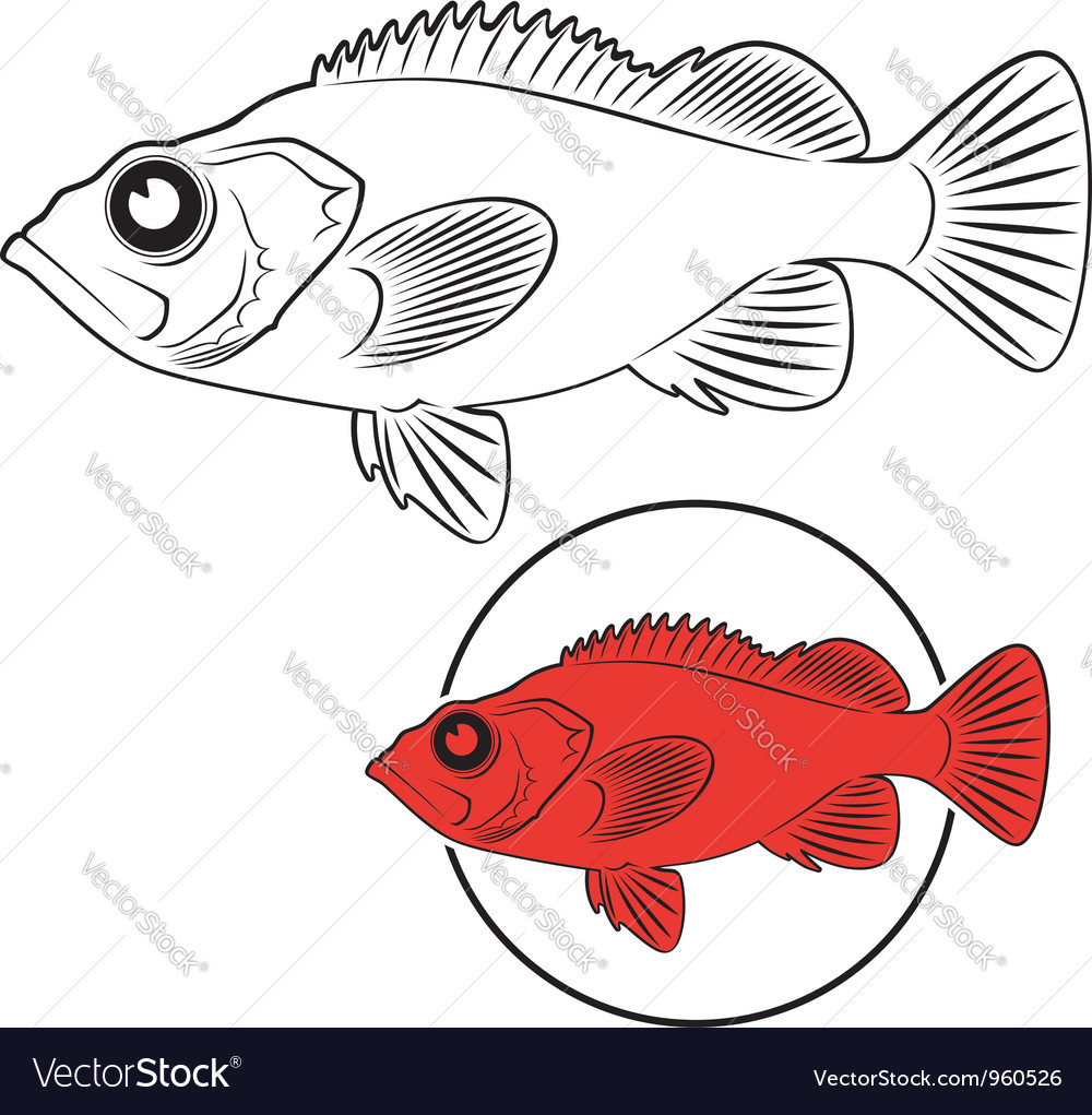 Sea bass Royalty Free Vector Image - VectorStock