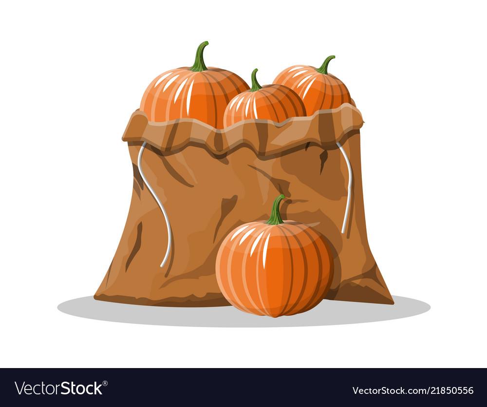 Orange pumpkin vegetable in canvas bag