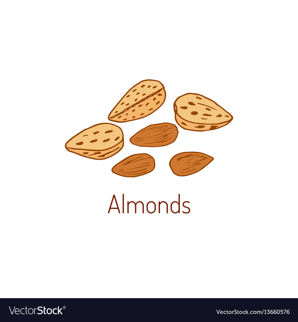 Almond hand drawn