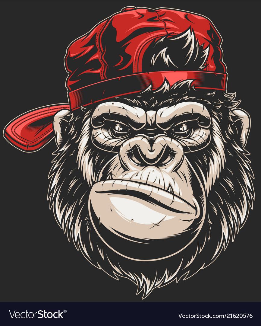 Monkeys head in a baseball cap