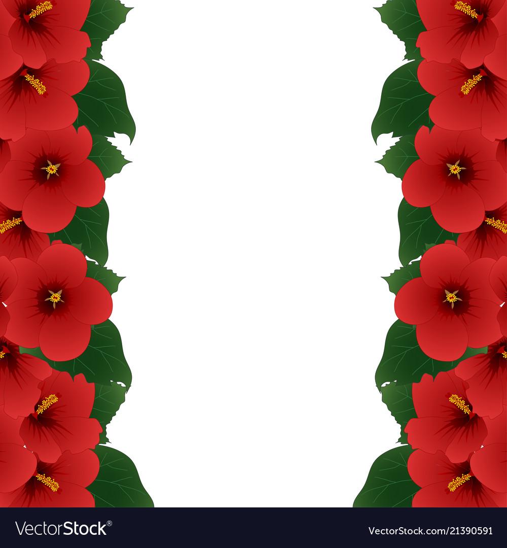 Red hibiscus flower - rose of sharon border
