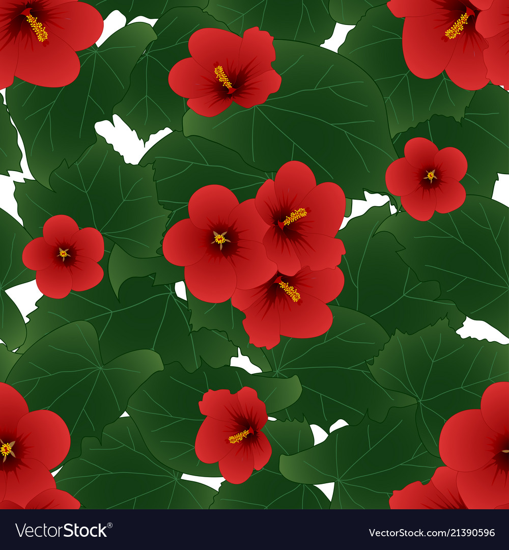 Red Hibiscus Syriacus Rose Of Sharon Isolated Vector Image
