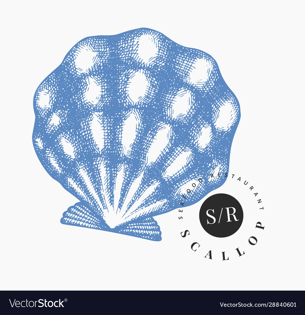 Scallop hand drawn seafood engraved style