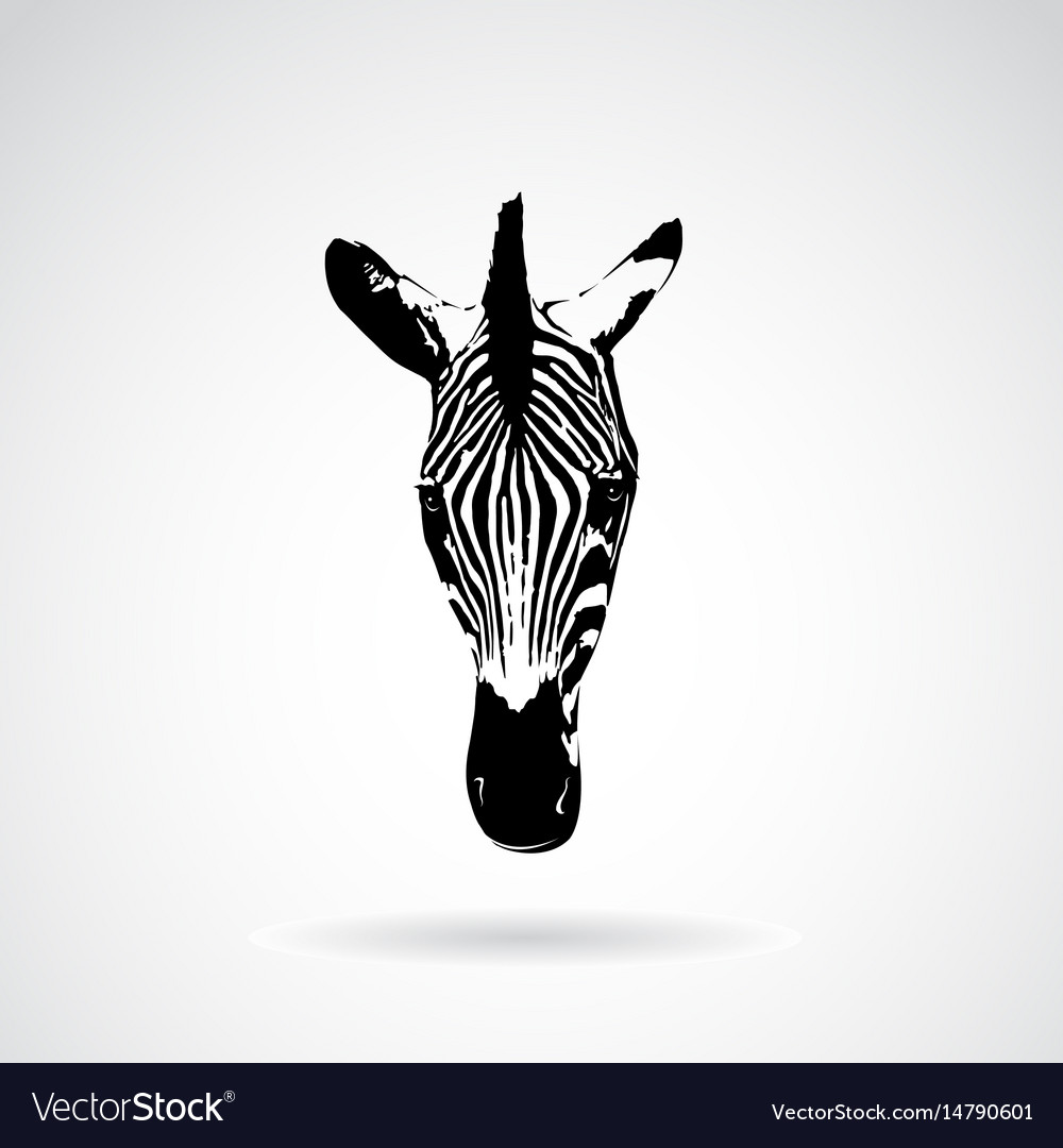 Zebra face on white background wild animals