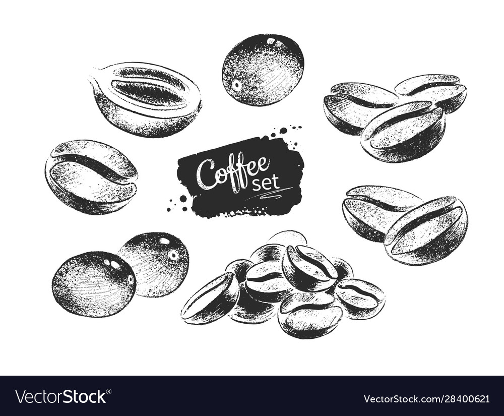 black and white coffee beans royalty free vector image vectorstock