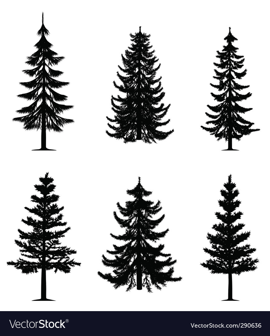 Pine Trees Collection Royalty Free Vector Image