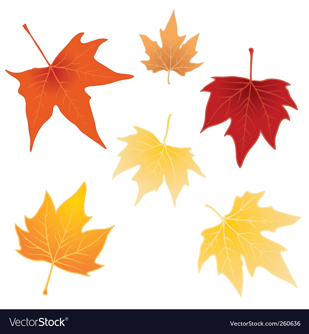 separate autumn leaves royalty free vector image