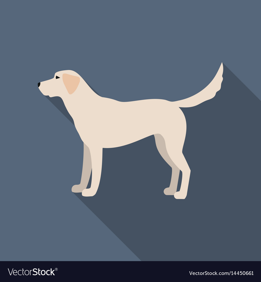 Labrador icon in flat style for web