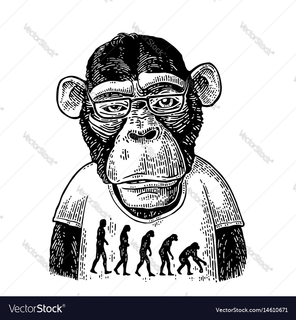 Monkeys in a t-shirt with the theory of evolution
