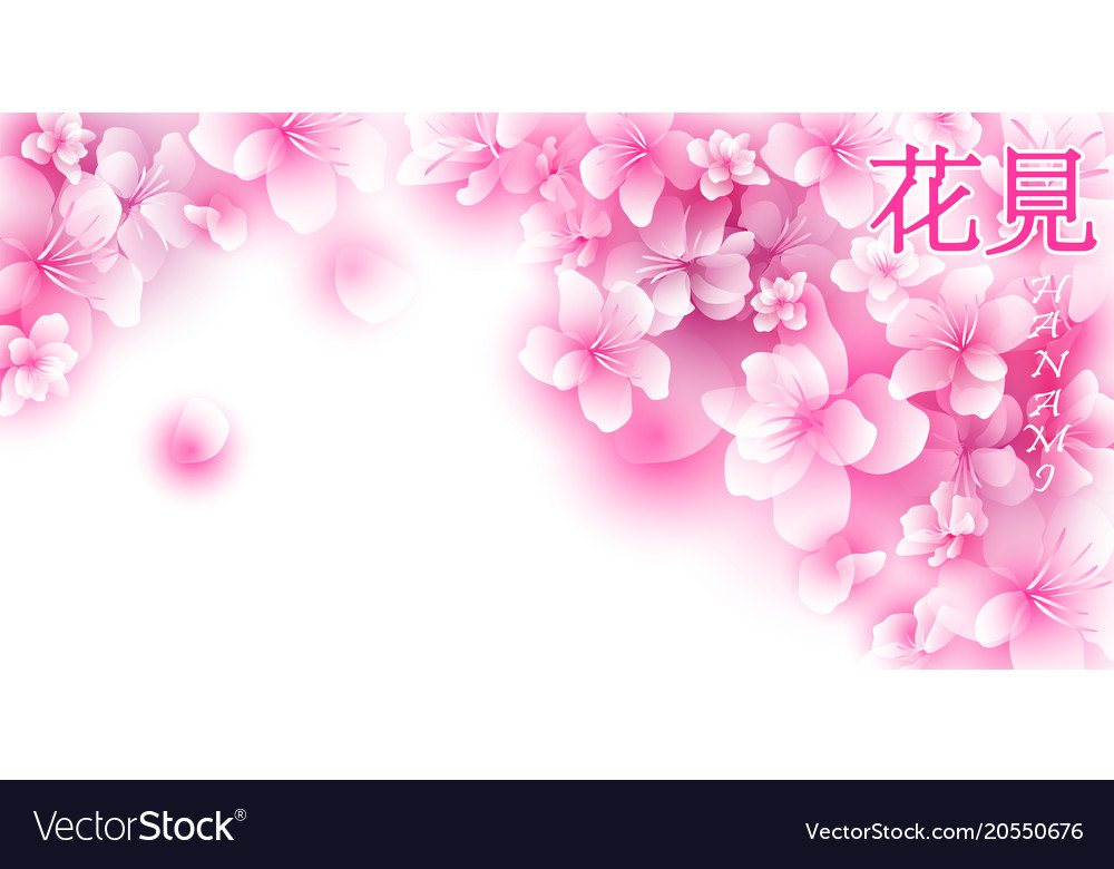 Hanami sakura background