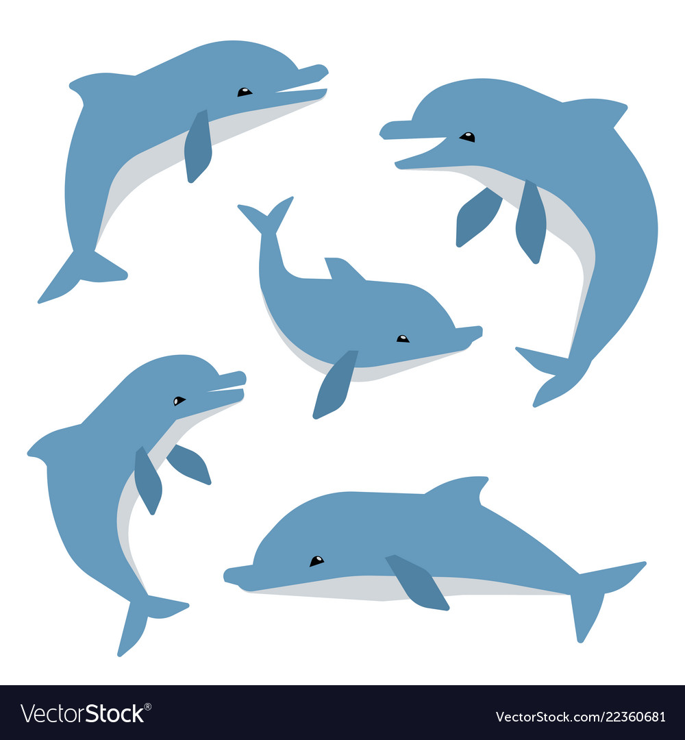 Cute dolphins in different poses