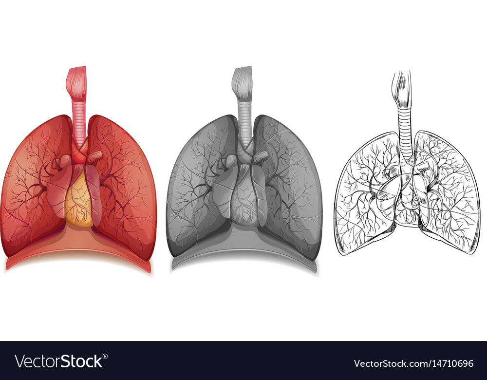 1doodle character for human lungs Royalty Free Vector Image