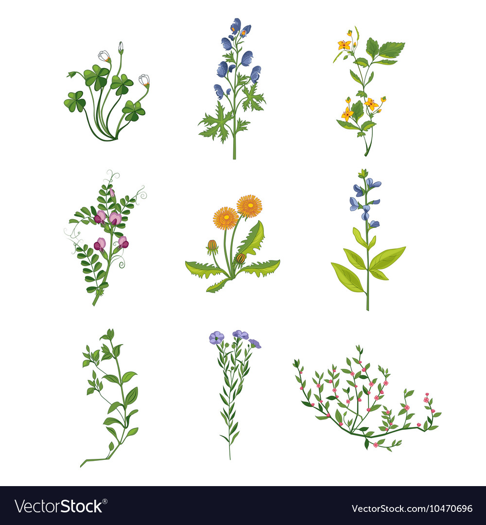 Wild Flowers Hand Drawn Collection Of Detailed