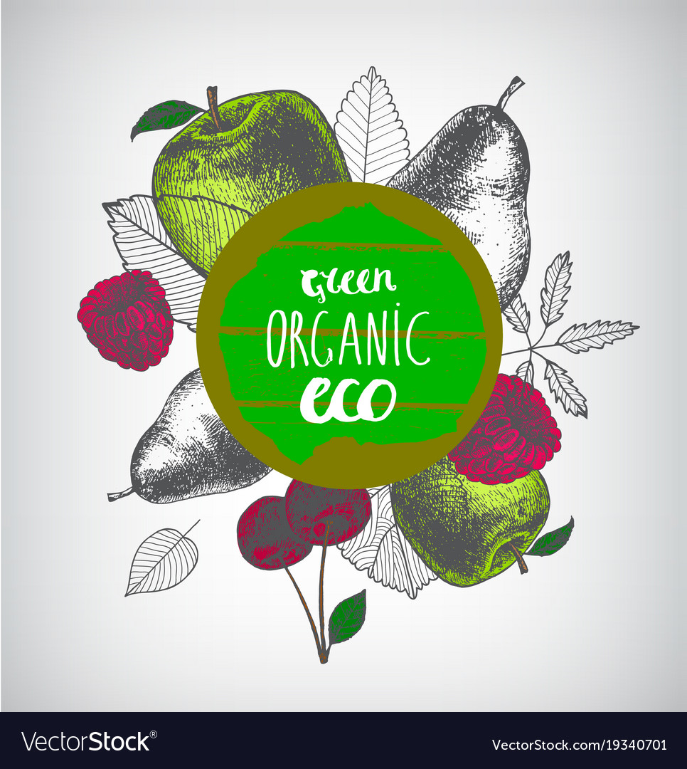 Organic eco food banner poster hand drawn