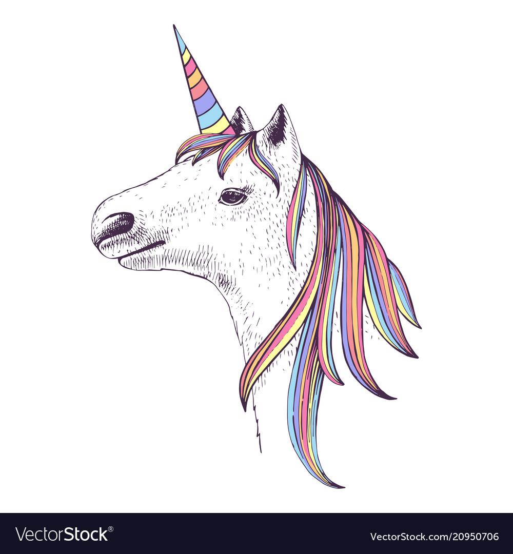 Hand drawn head of unicorn