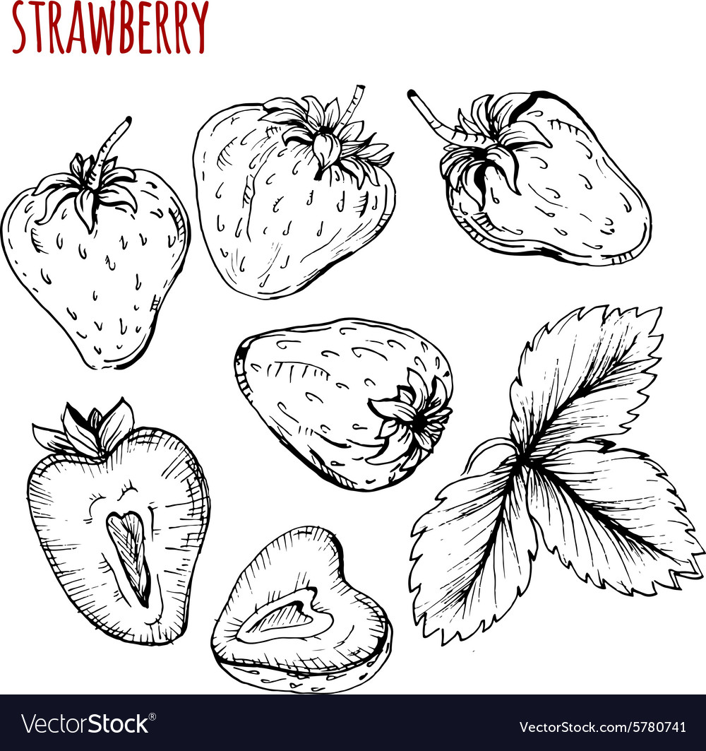 set strawberry drawing royalty free vector image vectorstock