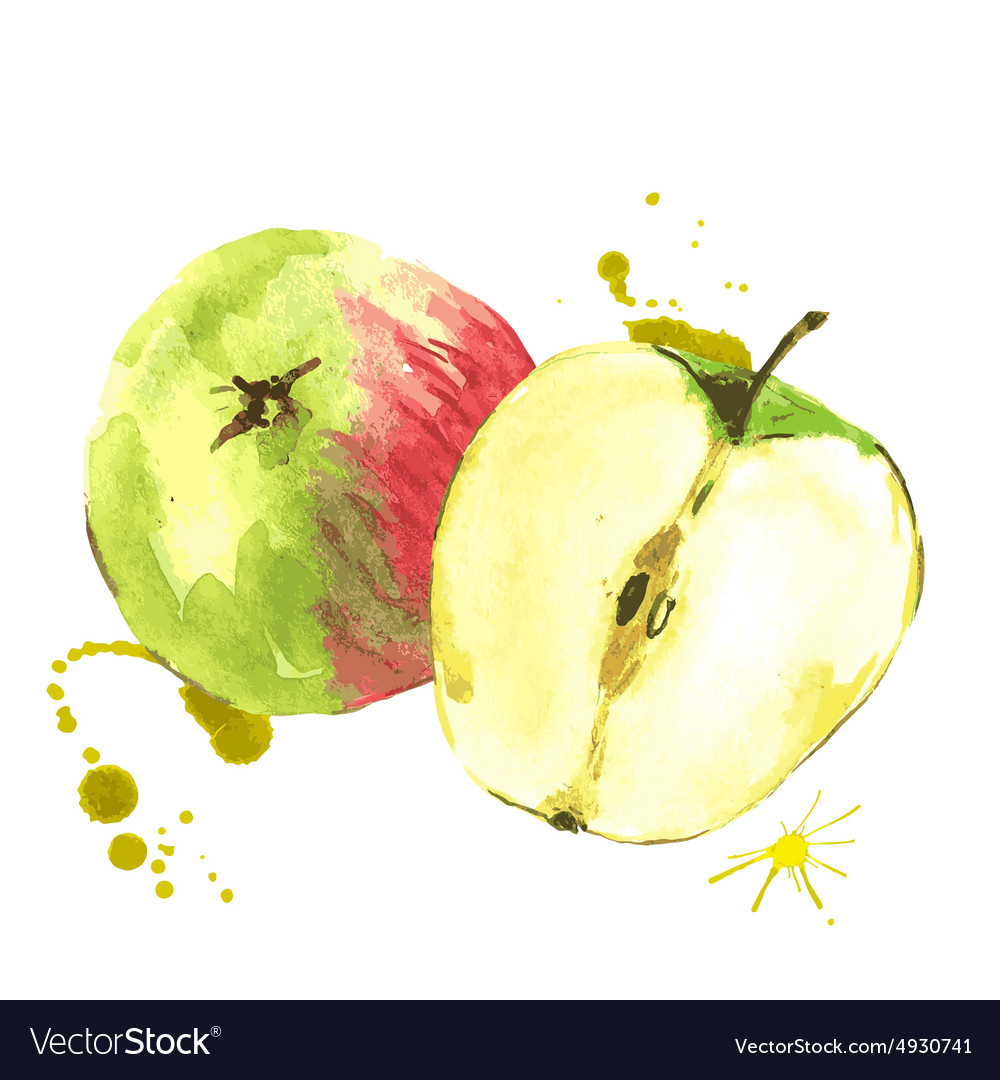 Watercolor apples summer hand drawn fruit