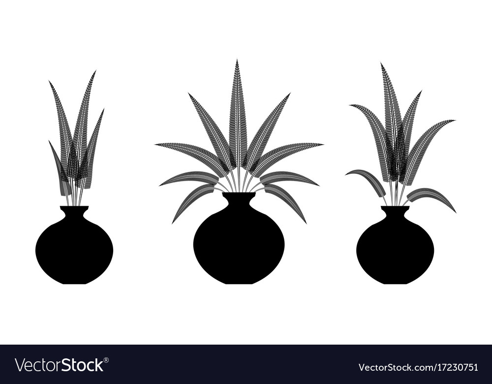 Decorate fern flowers in the vase vector image