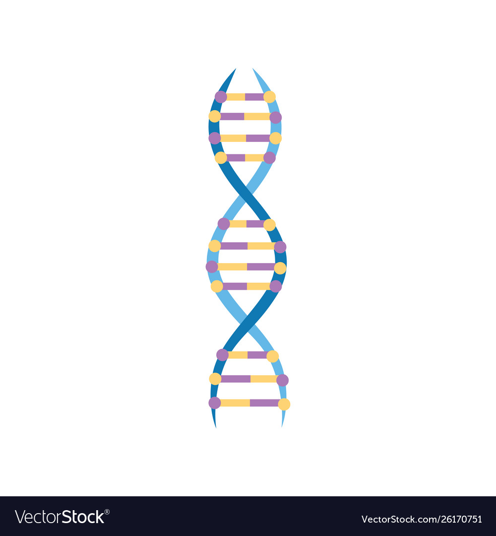 Educational Icon Structure A Dna Molecule Vector Image