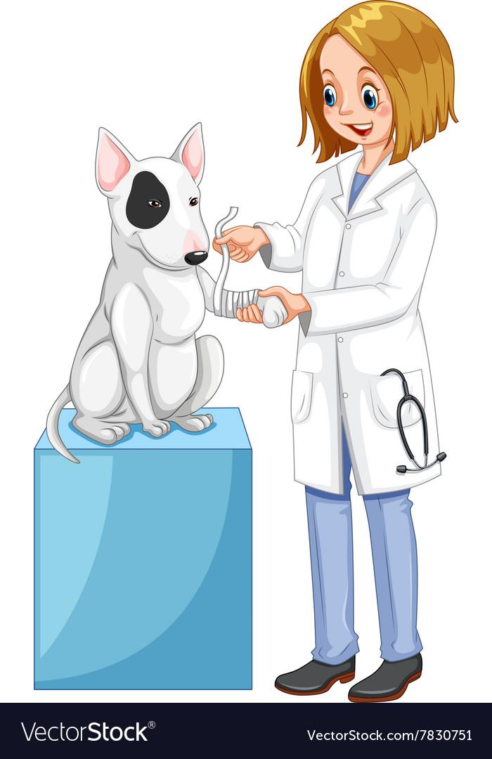 иллюстрации к профессии ветеринар историю