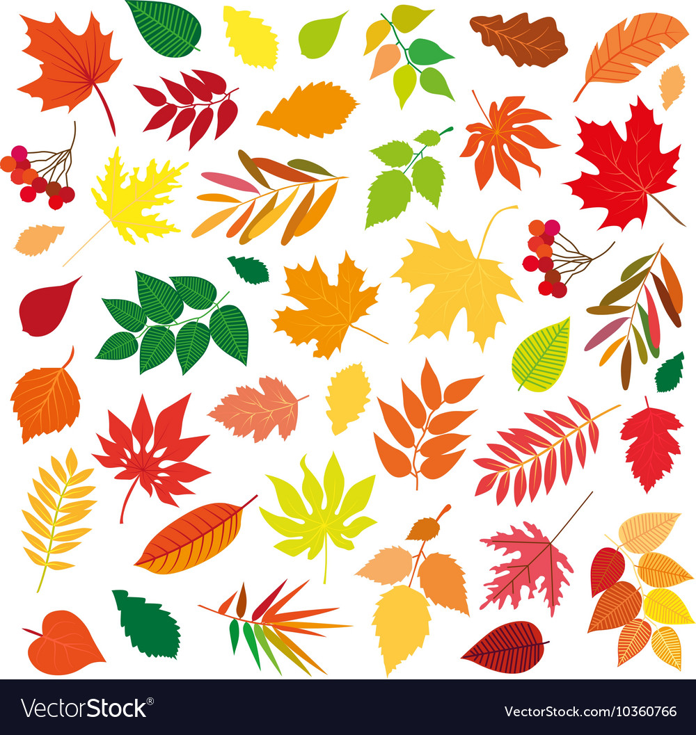 Big set of beautiful colorful autumn leaves