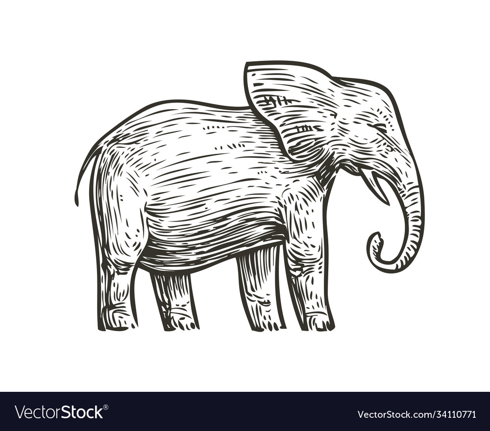 Elephant sketch animal hand drawn vintage vector