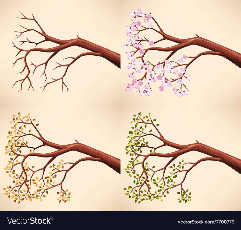 Tree branch in different seasons vector image