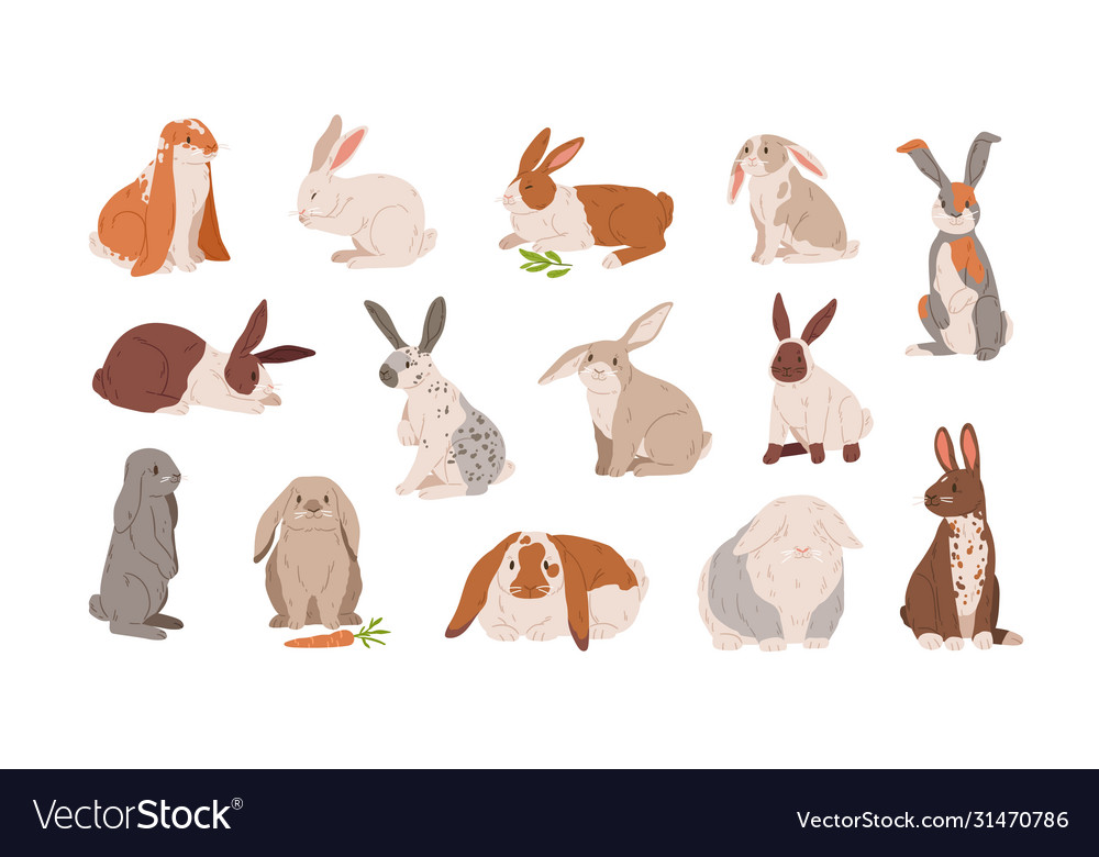Set different breed cute realistic rabbits