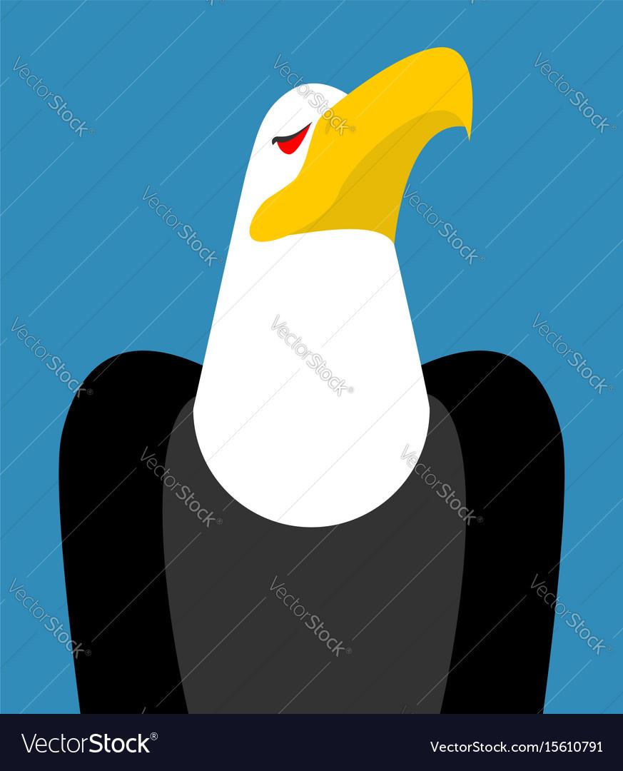 Bald eagle head isolated bird an eagles face on