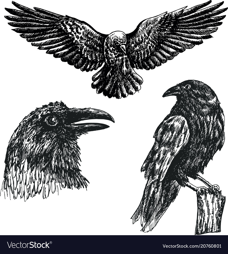 Black raven bird sketch icon set