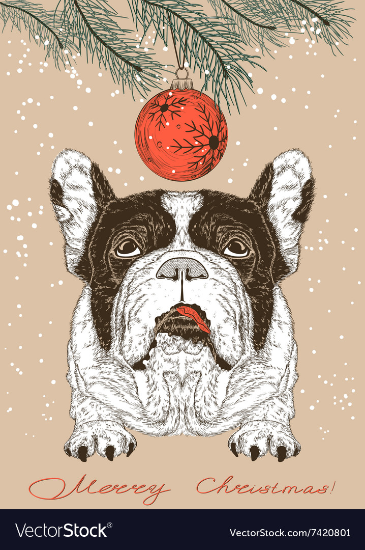 Christmas card with French Bulldog Royalty Free Vector Image