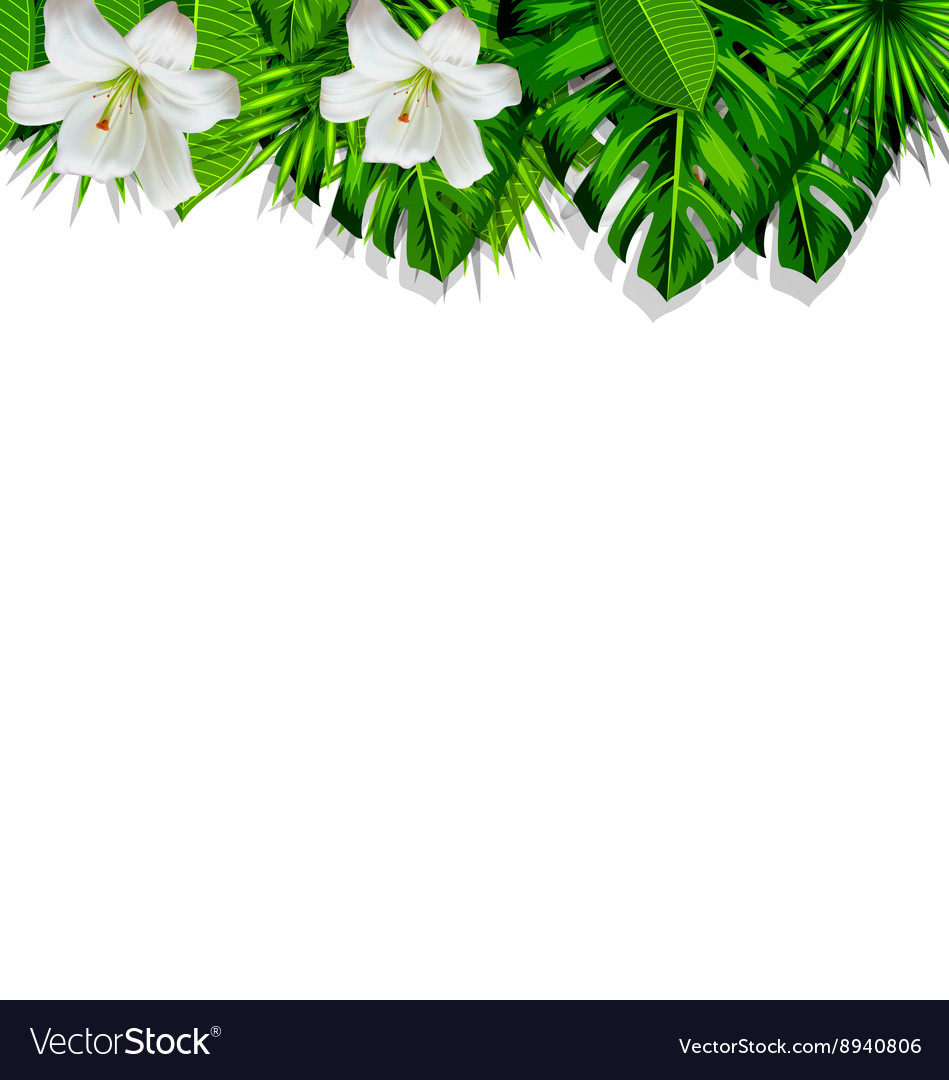 Frame branch tropical leaves and white flowers vector image mightylinksfo