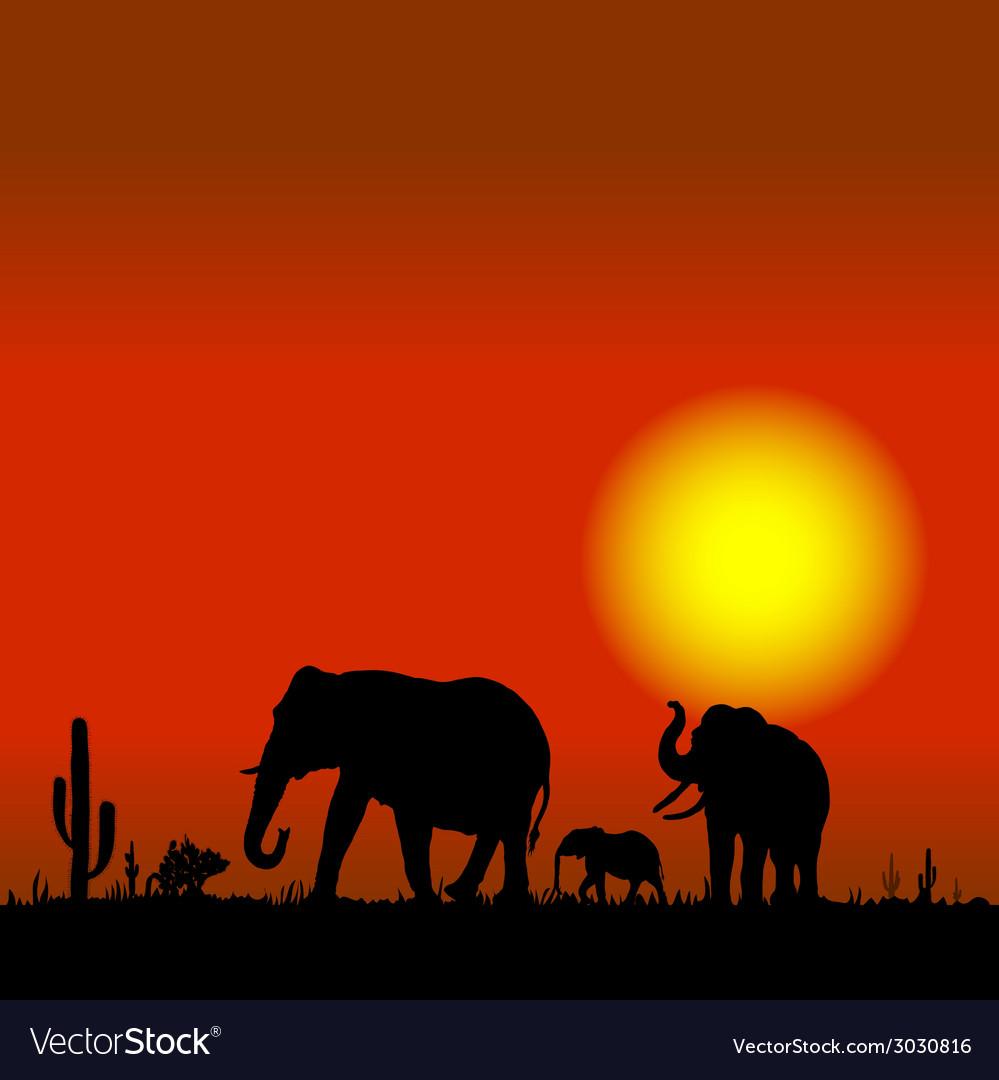 Elephant family in desert black silhouette vector image