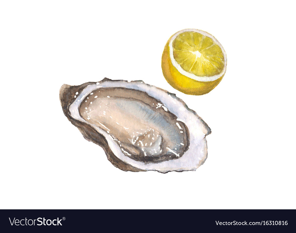Watercolor oyster and lemon isolated on white vector image