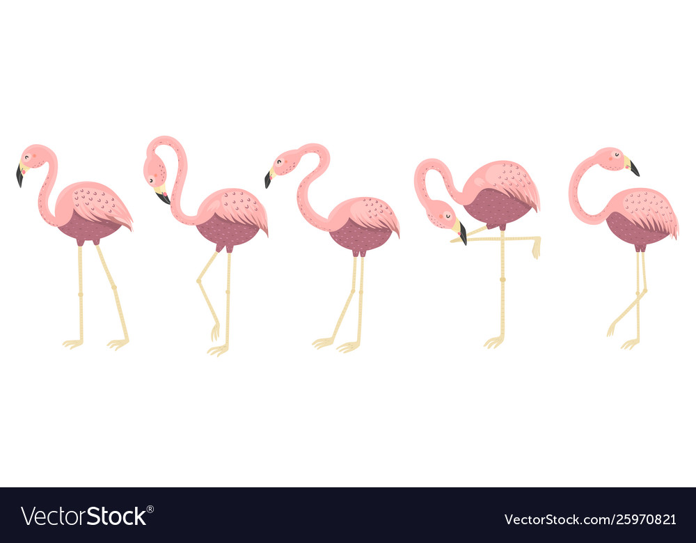 Funny flamingos in different poses collection