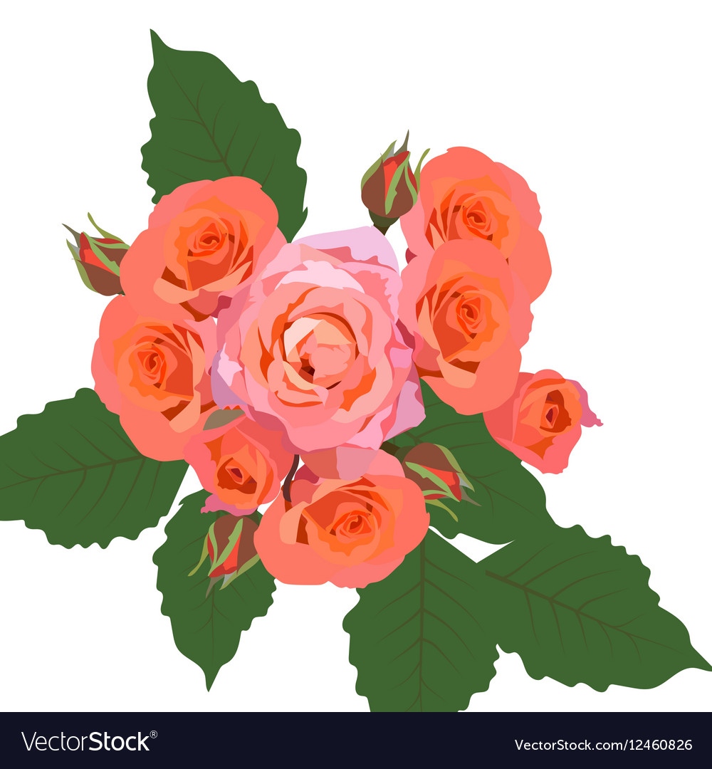 Delicate Pink Roses bouquet isolated vector image
