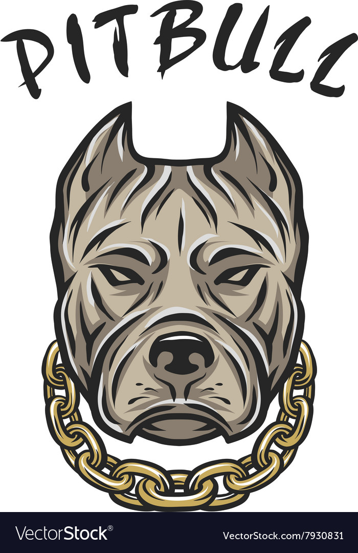 The head of a pit bull with a chain