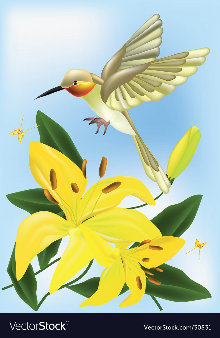 The humming-bird and lilies vector image